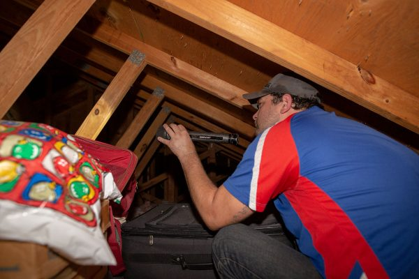 Texas Pride Chris inspecting the attic